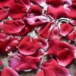 Flowers 1 - Susanna Bellini