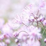 Flowers 2 - Susanna Bellini